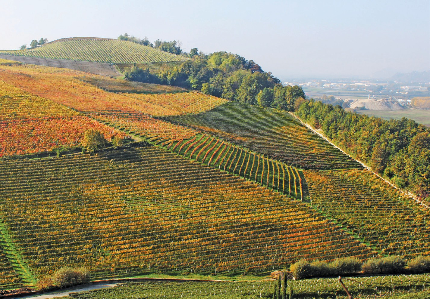 Vineyard SPOTLIGHT: Barolo and Barbaresco are reigning